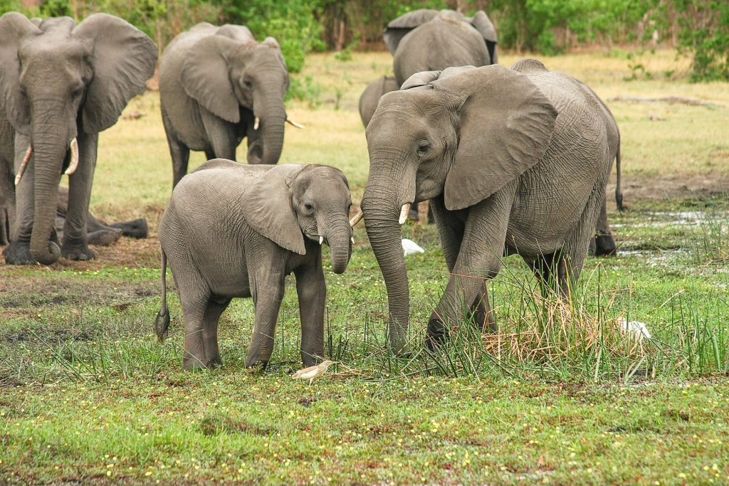 elephant-forked-roller-botswana-tour-southern-african-tours