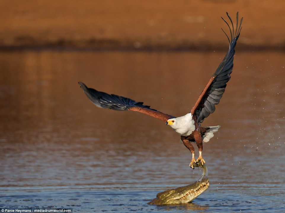 photo-of-eagle-botswana