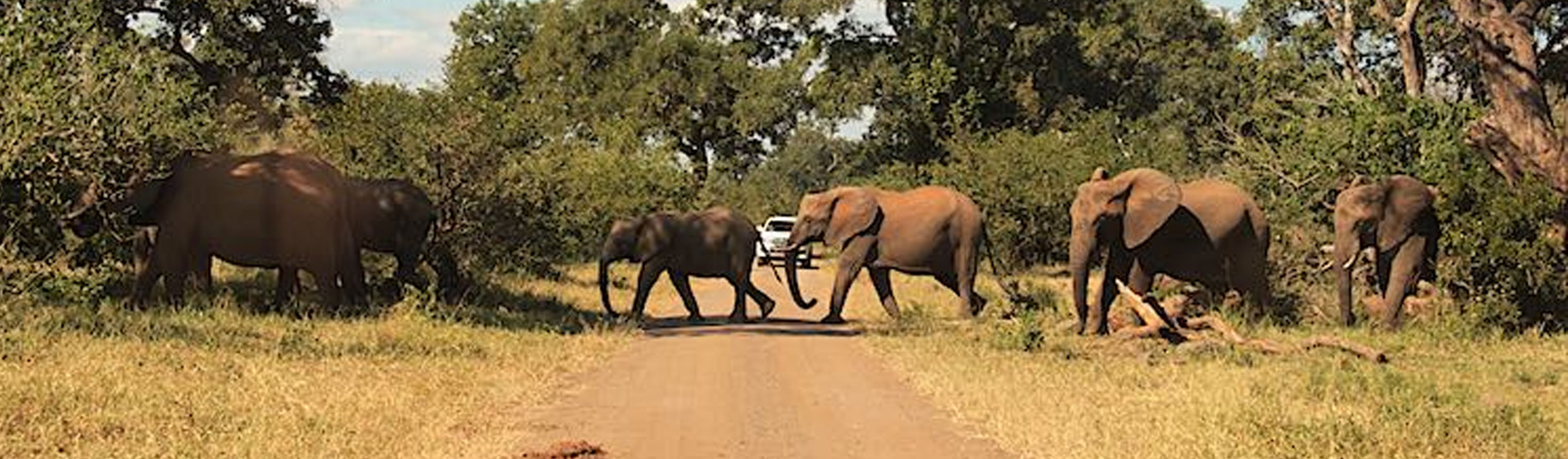 kruger-park-tours-southern-african-tours