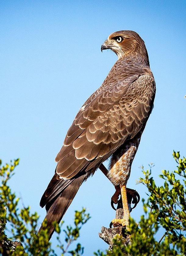 South-Africa-Birdwatching-Tours-and-Safaris