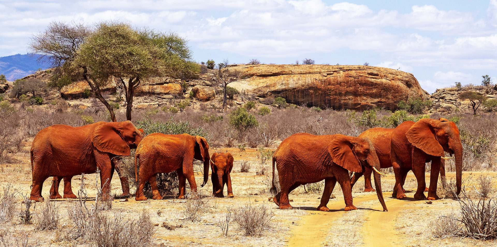 east africa - southern african tours